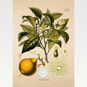 High Quality Botanical Print Wall Poster Orange