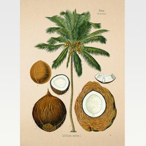 High Quality Botanical Print Wall Poster Coconut